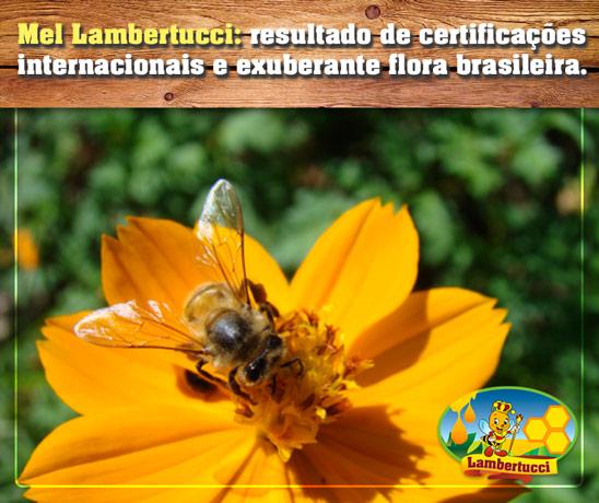 mel-lambertucci-exuberante-fauna-brasileira