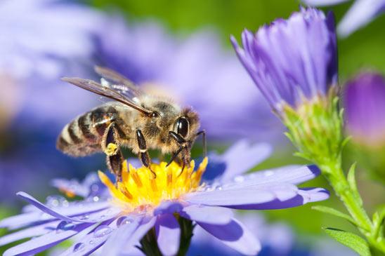 casa-branca-abelhas-mel2