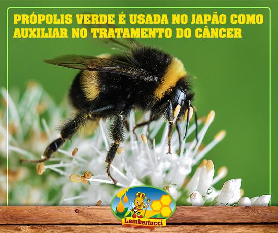 propolis-verde-jp
