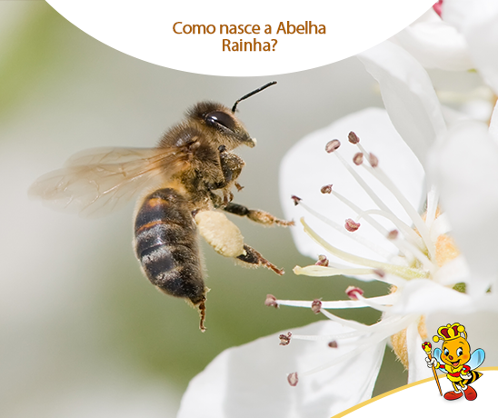 como-nasce-a-abelha-rainha